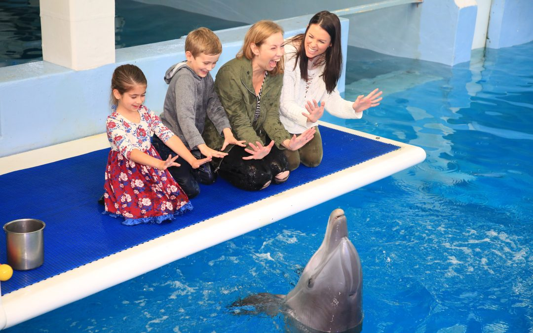Ten Things To Do at Clearwater Marine Aquarium