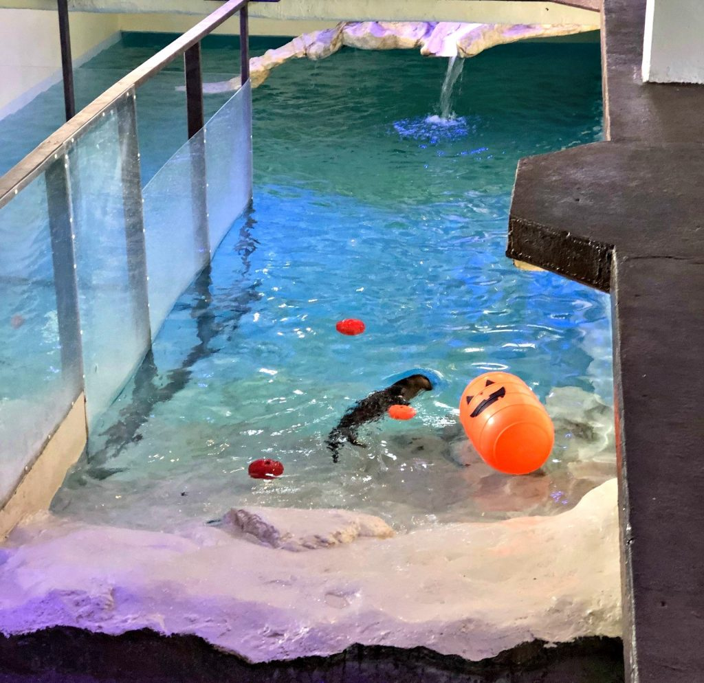 Inflatable Slide Clearwater Beach: Ten Things To Do At Clearwater Marine Aquarium